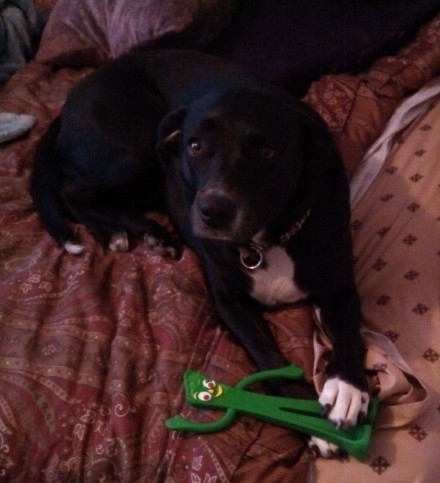 Rosie with her Gumby toy, 04/28/2014